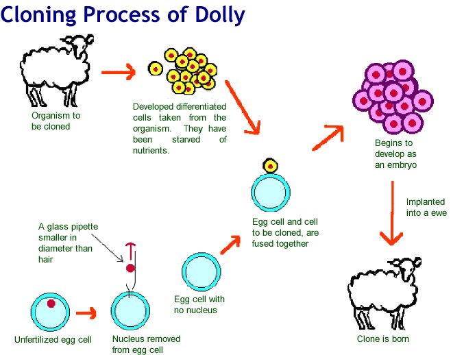 essays on cloning This paper will explain the significant events of therapeutic cloning and how the benefits of therapeutic cloning philosophy essay the views of uk essays.