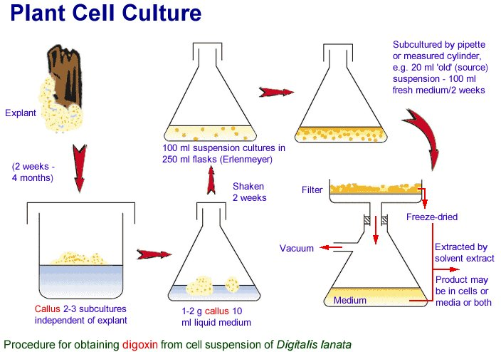 suspension culture in plant tissue culture