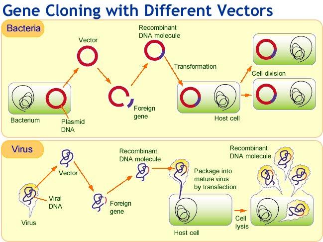 Biotechnology Genetic Engineering