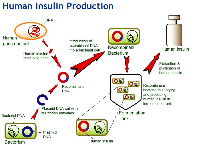 Biotechnology Health And Medicine